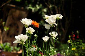 גינה עם צמחייה ארצישראלית