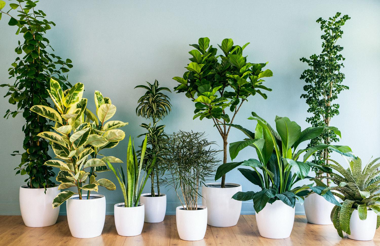 """צמחיית בית – עשרת הצמחים המומלצים ע""""פ 4 עונות"""