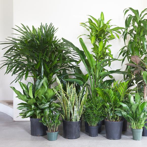 יש להתאים את הצמחים למיקום הנכון בבית